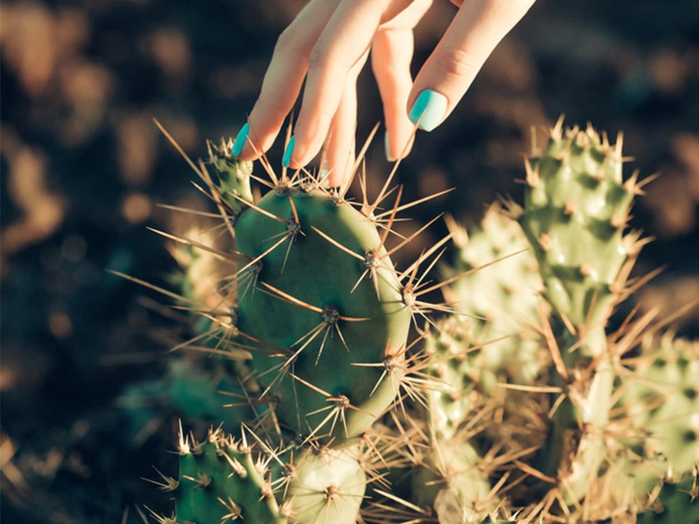 Produk dengan Kandungan Kaktus