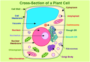 Important Biology Diagrams From All Chapters For CBSE Class 11