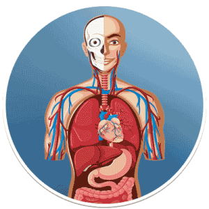 Biology  Introduction to Important Biology Topics for Class 6  12 Human Biology