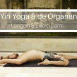 Yin Yoga & de Organen: Longen & Dikke Darm