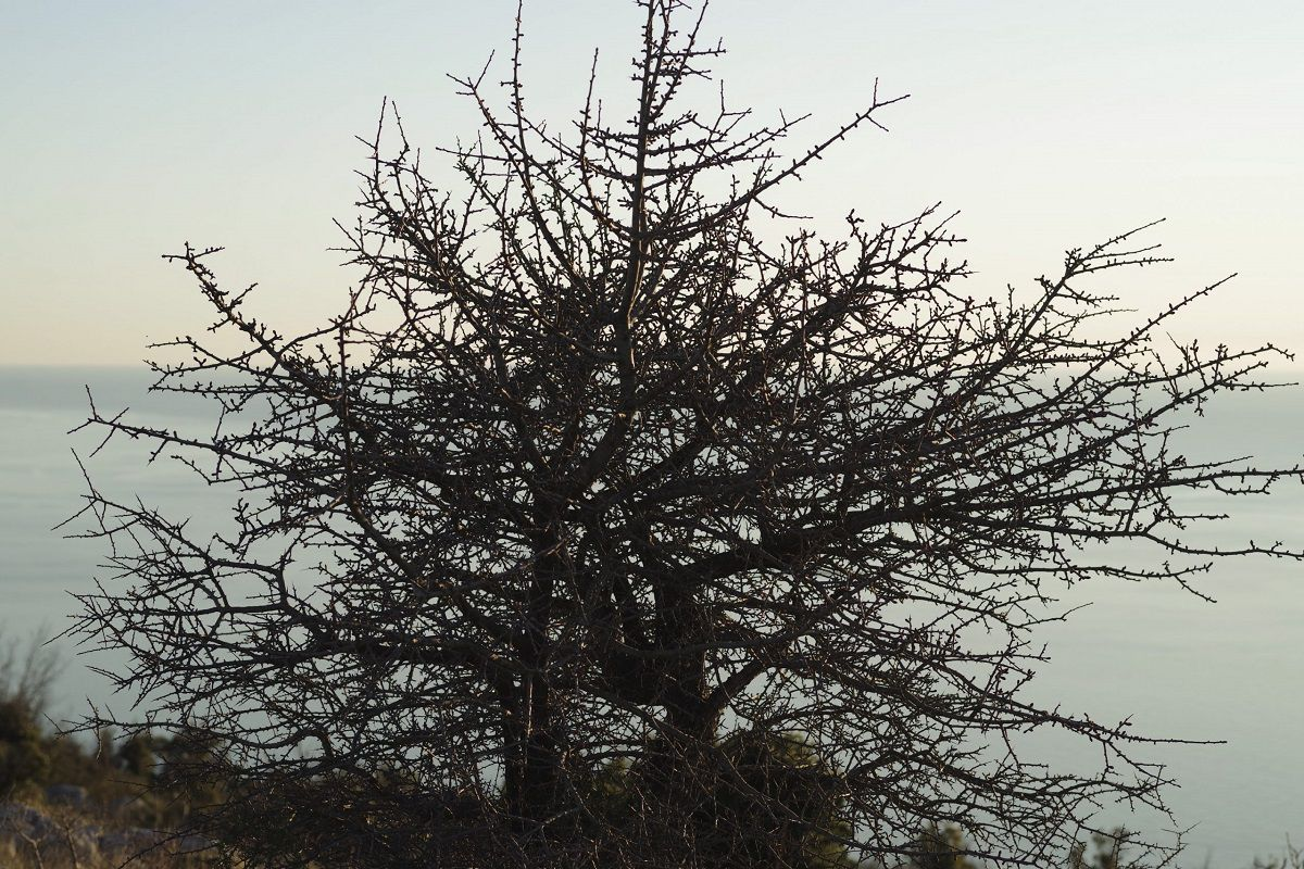 hvar-island-walk-winter-tree-medland-project