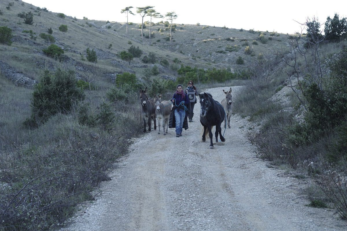jane-donkeys-hvar-island-med-land-project