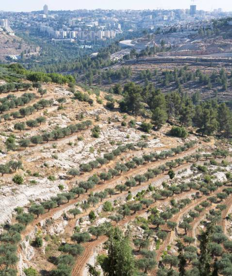 Cremisan-Valley