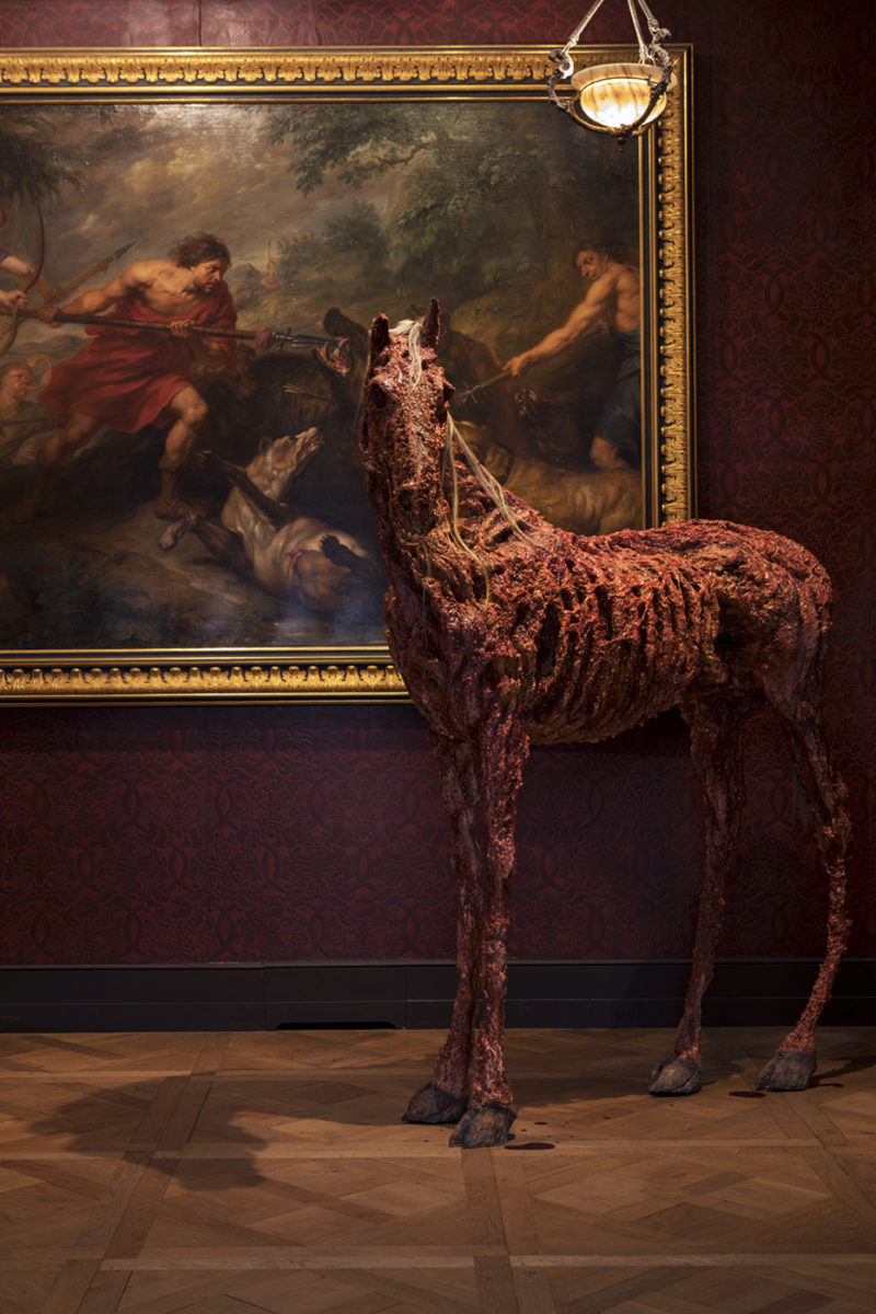 horse skeleton, artistic installation