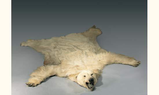 peau d ours blanc polaire lot 82