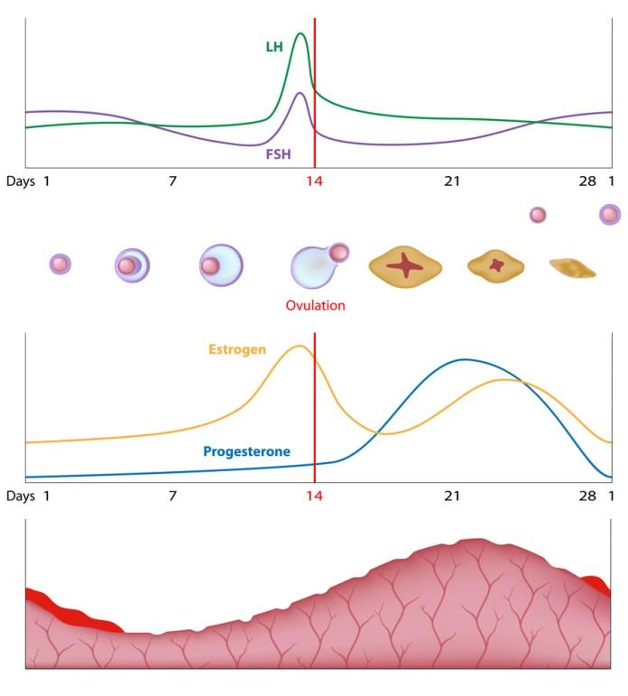 Cliomakeup-ritenzione-idrica-cellulite-rimedi-14