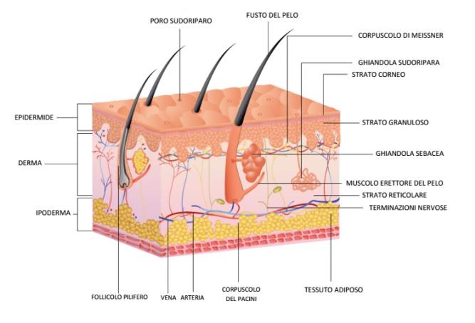 cliomakeup-depilazione-viso-16