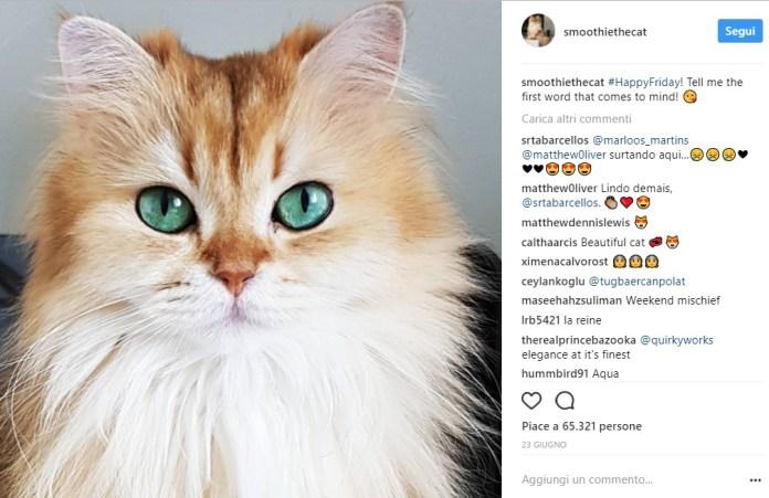 cliomakeup-gatti-famosi-instagram