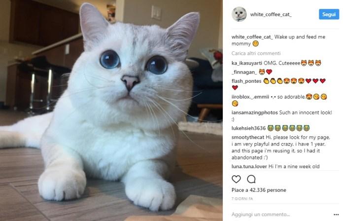 cliomakeup-gatti-famosi-instagram-15