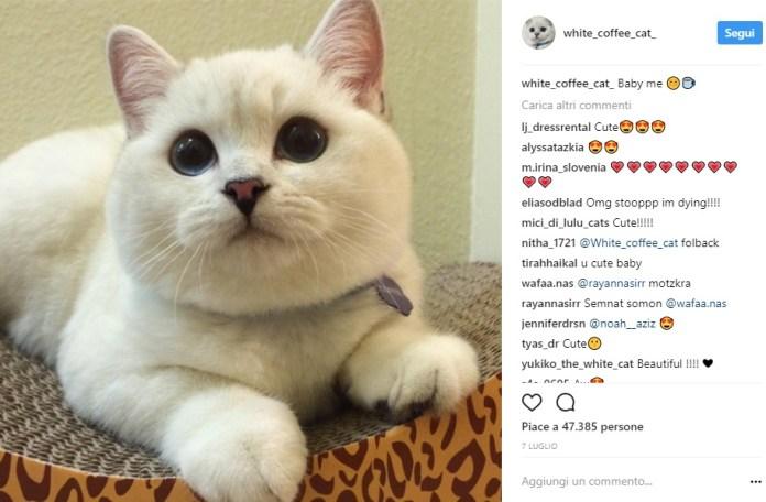 cliomakeup-gatti-famosi-instagram-16