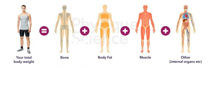 cliomakeup-aumentare-metabolismo-composizione-corporea-3