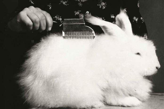 cliomakeup-90-anni-luisa-spagnoli-11-coniglio-angora
