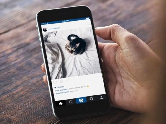 cliomakeup-come-avere-successo-su-instagram-12-gatto-feed