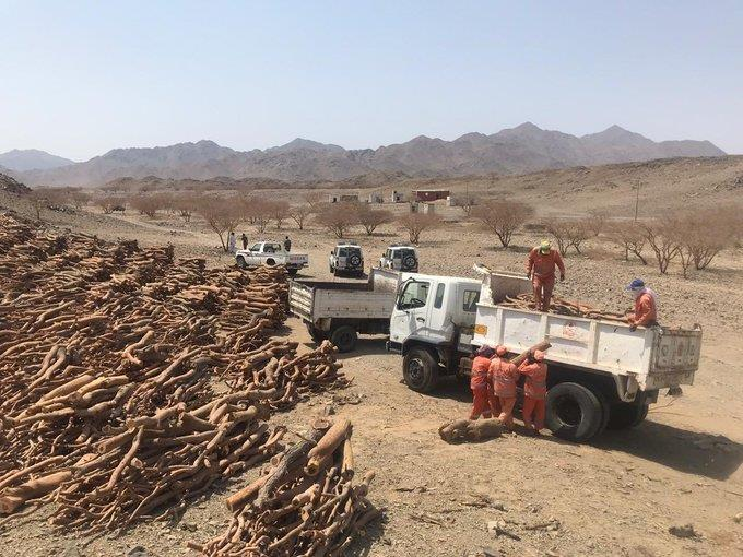 مصادرة 60 طناً من الحطب والفحم المحلي