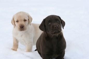 Puppies In Pure Spirit