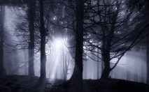 The Dark Forest 4