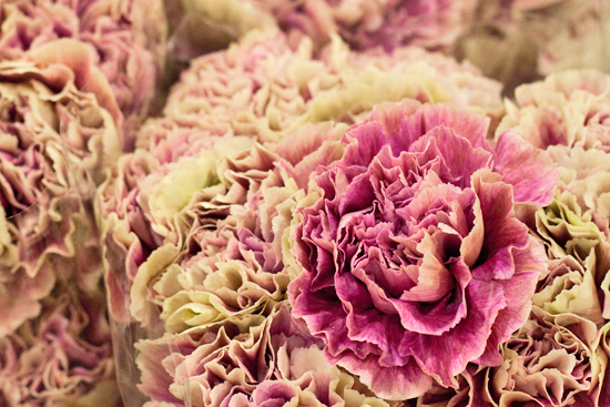Image result for covent garden carnations
