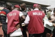 Image result for NDLEA arrests 215 suspects, seize 219.999 kg of illicit drugs