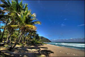 Sandy beach with palm trees against a blue sky - Reunion Island travel guide