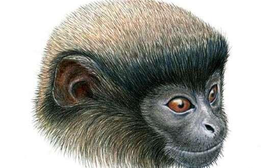 C'est un Titi ! une nouvelle espèce de singe découverte au Pérou
