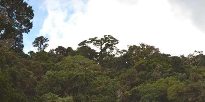 Les forêts tropicales, des «puits de carbone» hautement vulnérables