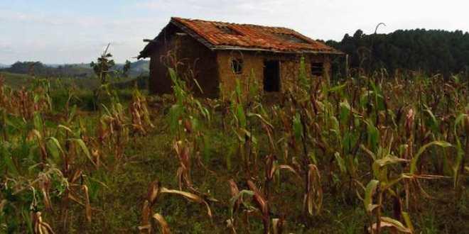 Les politiques agricoles en Afrique ruinent les plus pauvres