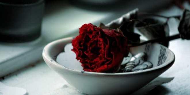 Monsanto cultive une rose qui ne se fane pas