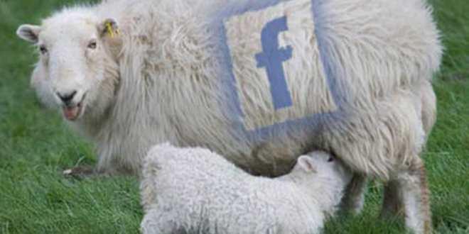 Réseaux sociaux : 59 % des liens ne sont jamais visités