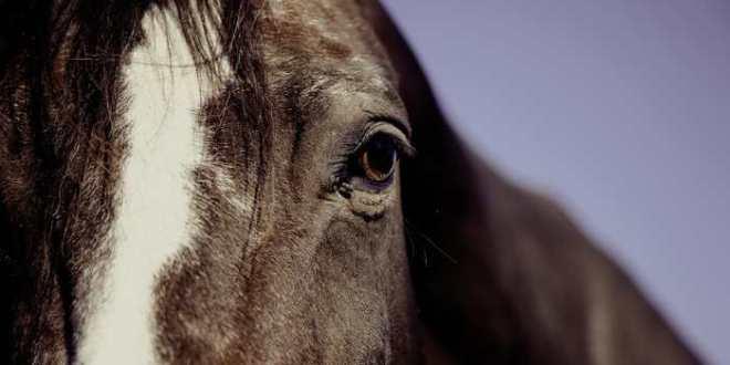 Les chevaux peuvent utiliser des symboles pour nous parler