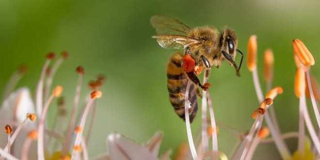 Les émotions et le bonheur chez les abeilles