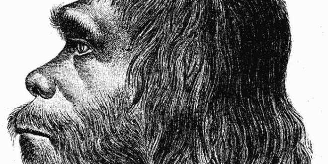 Nous purgeons nos gènes de Néandertal grâce à la sélection naturelle