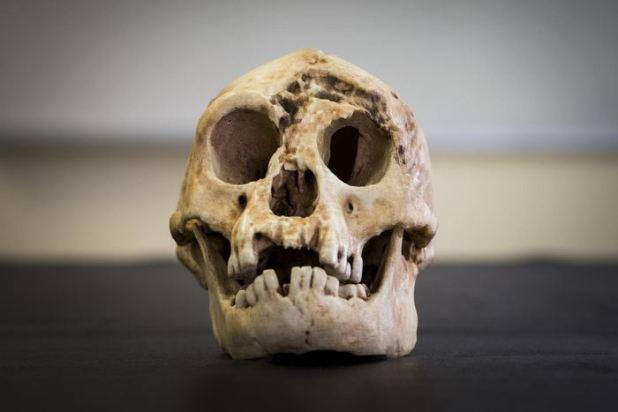 Un crâne reconstruit de l'Homme de Florès - Crédit : Stuart Hay, ANU.