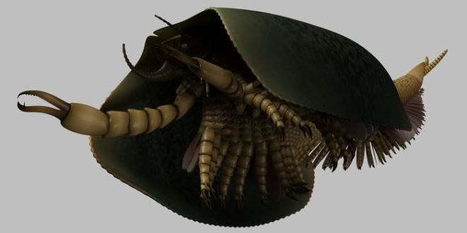 Découverte d'un ancêtre des mandibulés de 507 millions d'années