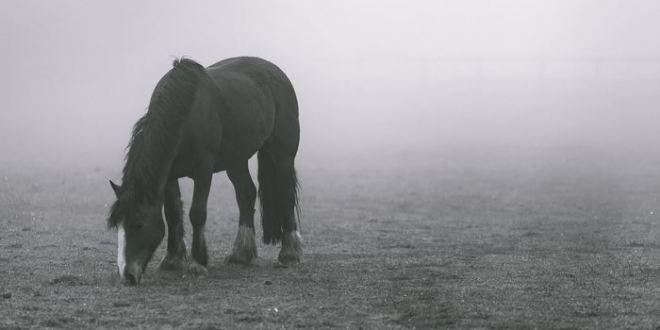 Comment la domestication a-t-elle modifié le génome des chevaux