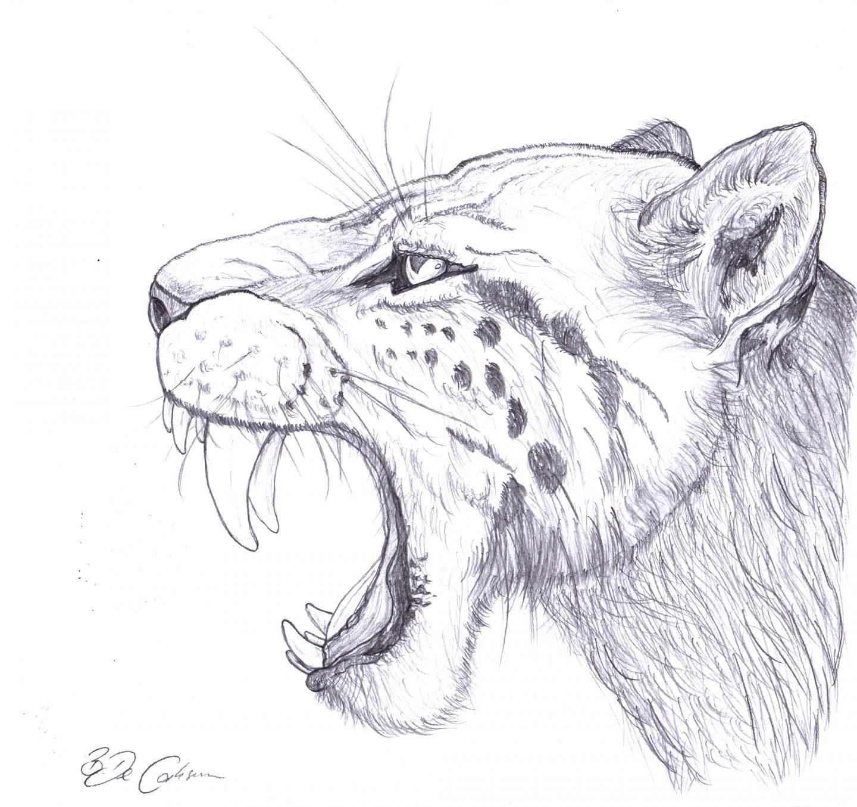 L Adn Eclaire L Histoire Du Tigre A Dents De Sabre