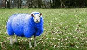 The Blue and White Sheep of the family