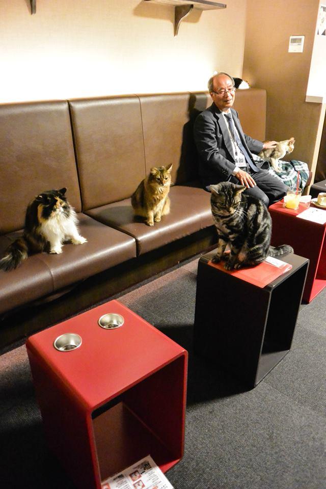 kattencafé in tokio