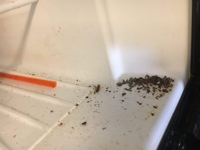 Photo Of Meritage Apartments Milpitas Ca United States Roach Infested Apartment