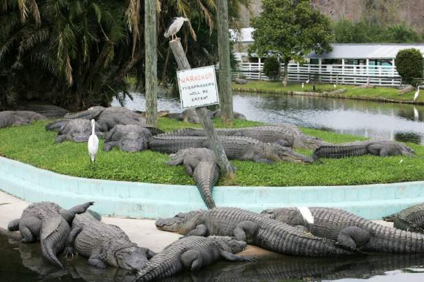Gatorland - Orlando, FL, United States