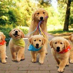 Resultado de imagem para dog walking