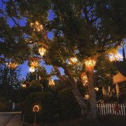 Photo Of Chandelier Tree Los Angeles Ca United States The