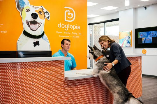 7 Best Dog Boarding and Cat Boarding 2021 services Near me