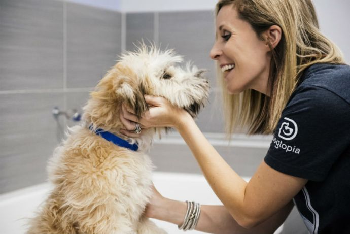 Groomer petting the Goldendoodle at Dogtopia of Frederick Spa.