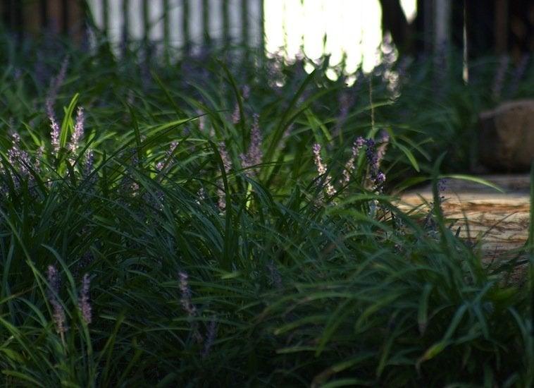 Border Plants Low Maintenance Landscaping 17 Great