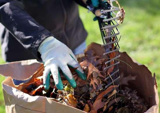 Whats Best Way Rake Leaves