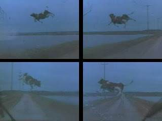 Twister flying cow