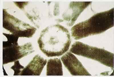 A foto da misteriosa criatura no meio dos filamentos