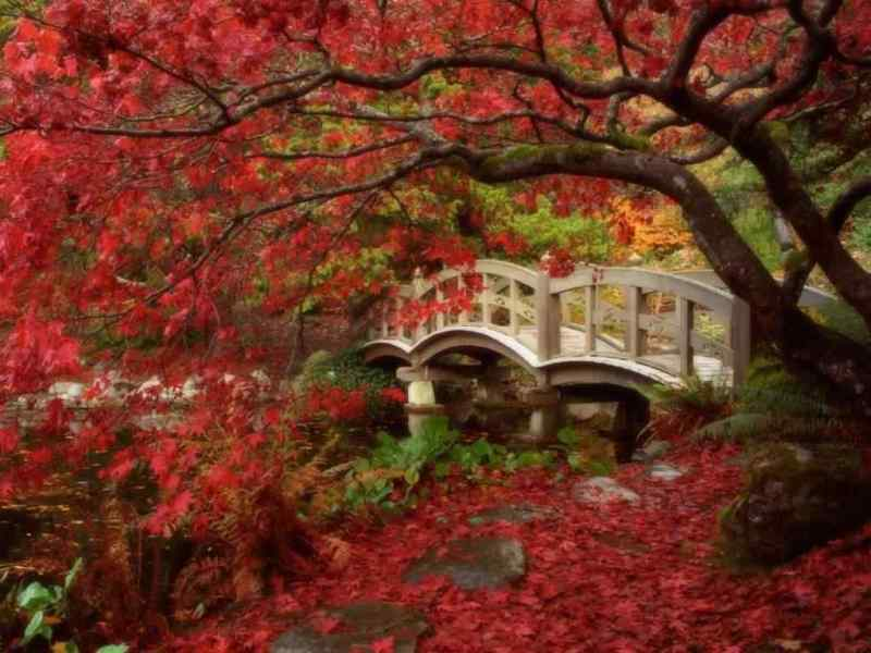-beautiful-Japan-beautiful-places-20150795-1024-768