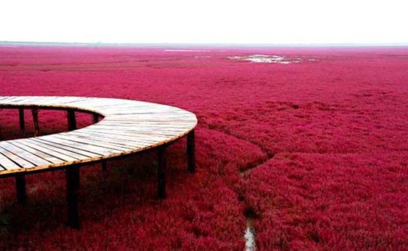 Red-Beach-Panjin-China3