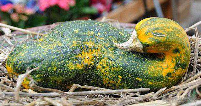 vegetables_that_are_desperately_trying_to_be_something_else_640_12
